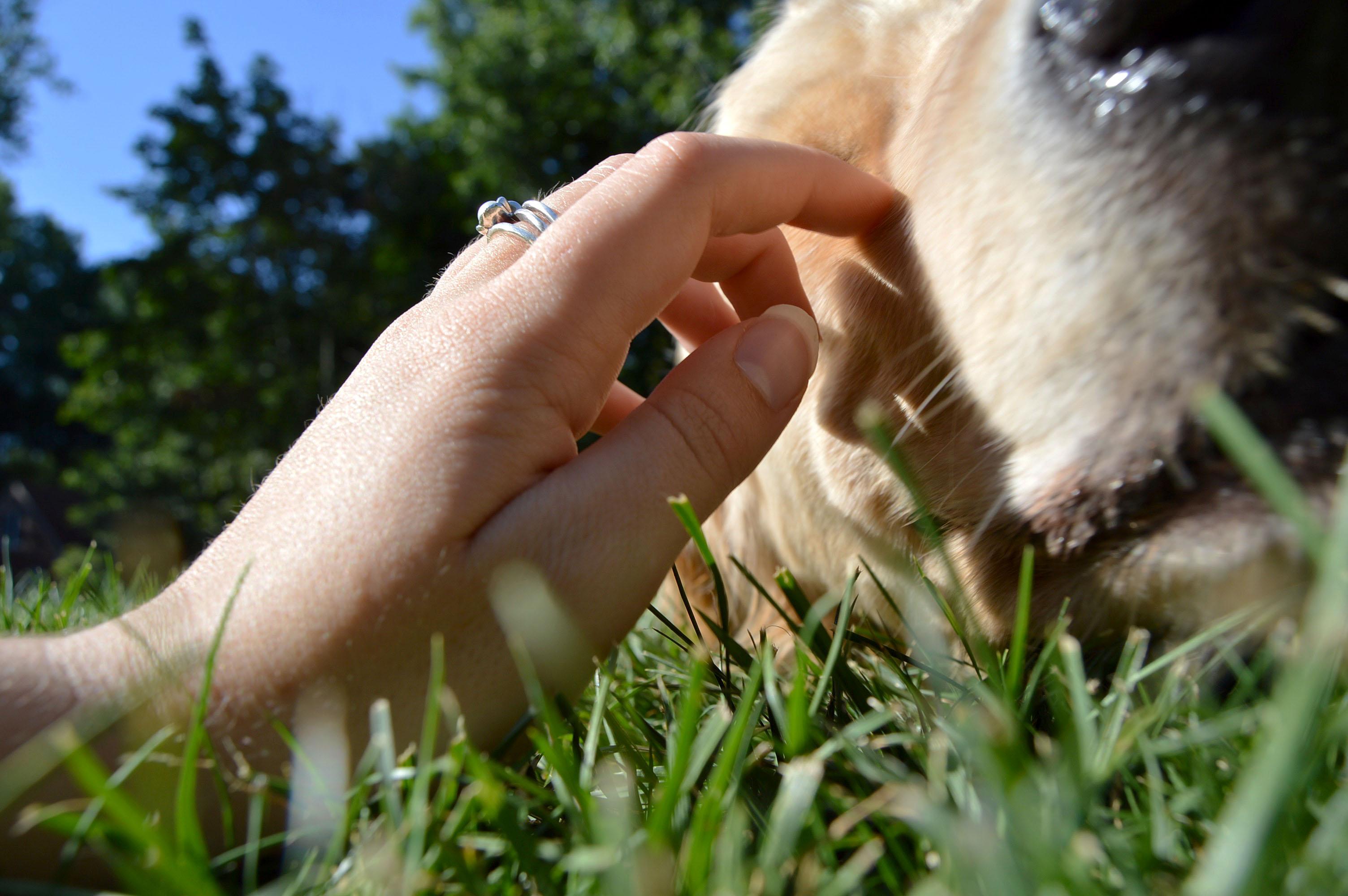 companionship with pets