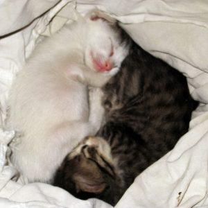 kittens-when-i-found-them-550x550
