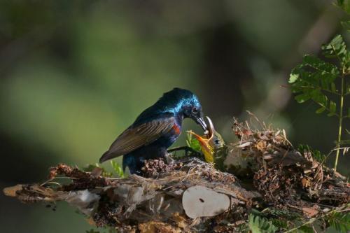 """""""Feeding"""" Photo by Aung Myo Tun"""