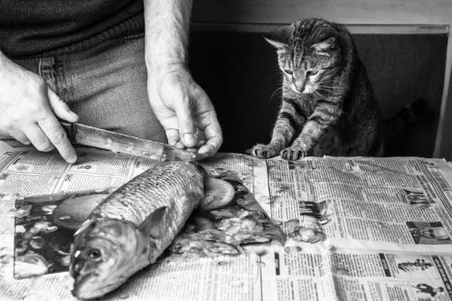 """""""Is it all for me?"""" Photo by Nadezhda Javadova"""