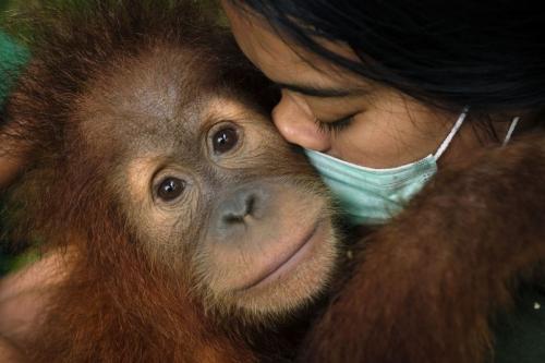 """""""Saving Orangutans - Forest School"""" Photo by Alain Schroeder"""