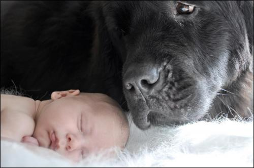 """Watching Over His Baby"" Photo by Jennifer Miller"